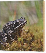 Beutiful Frog On The Moss Wood Print