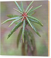 Beutifyl Rhododendron Wood Print