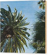 Beverly Palms Wood Print