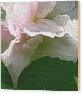 China Rose 2 Wood Print