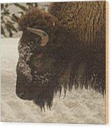 Beware Of The Bison Wood Print