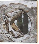 Beyond The Log Wood Print