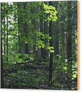 Beyond The Trees Wood Print