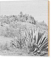 Bidwell Park Cactus Wood Print
