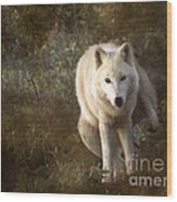Big Bad Wolf Sprinkling The Grass Wood Print