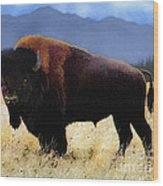 Big Bison Wood Print