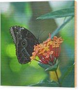 Big Boy Butterfly Wood Print
