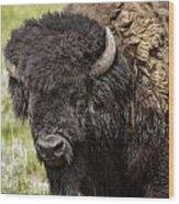 Big Bruiser Bison Wood Print
