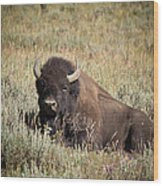 Big Buff - Bison - Buffalo - Yellowstone National Park - Wyoming Wood Print