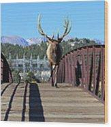 Big Bull On The Bridge Wood Print