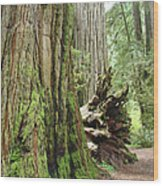 Big California Redwood Tree Forest Art Prints Wood Print