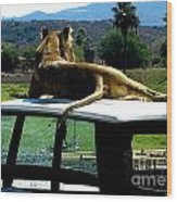Big Cat Just Resting Wood Print
