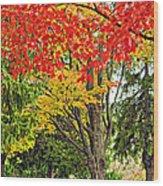Big Colorful Sleep Wood Print