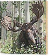 Big Daddy The Moose 3 Wood Print
