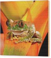 Big Eye Treefrog, Leptopelis Wood Print