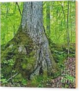 Big Foot Forest Wood Print
