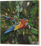 Big Glider Macaw Digital Art Wood Print