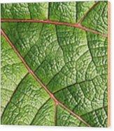 Big Green Leaf 5d22460 Wood Print