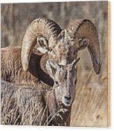 Big Horn Little Horn Wood Print