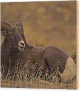Big Horn Ram   #4452 Wood Print