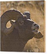 Big Horn Ram   #4856 Wood Print