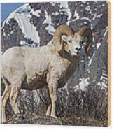 Big Horn Ram In Spring Wood Print