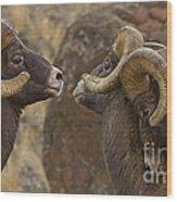 Big Horn Rams   #4989 - Signed Wood Print