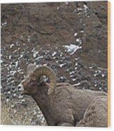 Big Horn Rams And Hoo Doos   #6587 Wood Print
