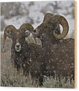 Big Horn Rams In The Snow   #2493 Wood Print
