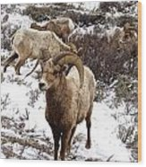 Big Horn Sheep In The Snow Wood Print