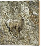 Big Horn Sheep On Mountain Wood Print
