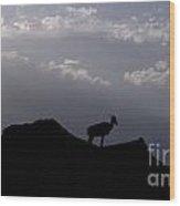 Big Horned Sheep Badlands National Park Wood Print