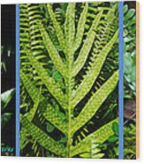 Big Island Of Hawaii Ferns Wood Print by Colleen Cannon
