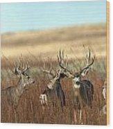 Big Mule Deer Bucks Wood Print