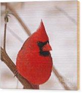 Big Red  Cardinal Bird In Snow Wood Print