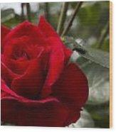 Big Red Rose Wood Print