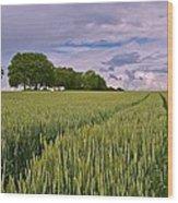 Big Sky Montana Wheat Field  Wood Print