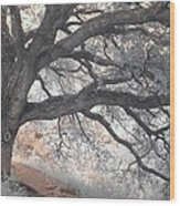 Big Sur Oak Wood Print