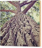 Big Tree Bark Wood Print
