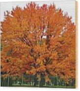 Big Tree In Autumn Wood Print