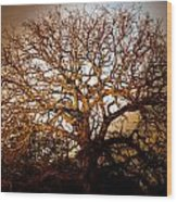 Big Tree Wood Print