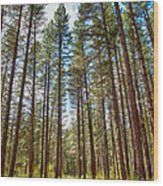 Big Valley Views Mvsta Trail Wood Print