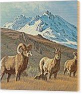 Bighorn Below Electric Peak Wood Print