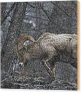 Bighorn Caught In A Blizzard Wood Print