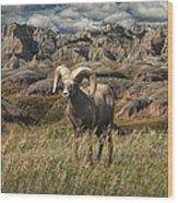Bighorn Ram In The Badlands Wood Print