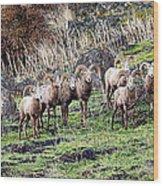 Bighorn Row Wood Print