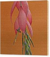 Bilbergia  Windii Blossom Wood Print by Heiko Koehrer-Wagner