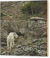 Billy Goat 3 Wood Print
