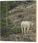 Billy Goat 4 Wood Print
