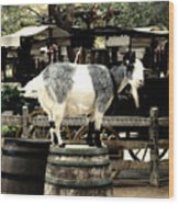 Billy Goat Big Thunder Ranch Frontierland Disneyland Wood Print